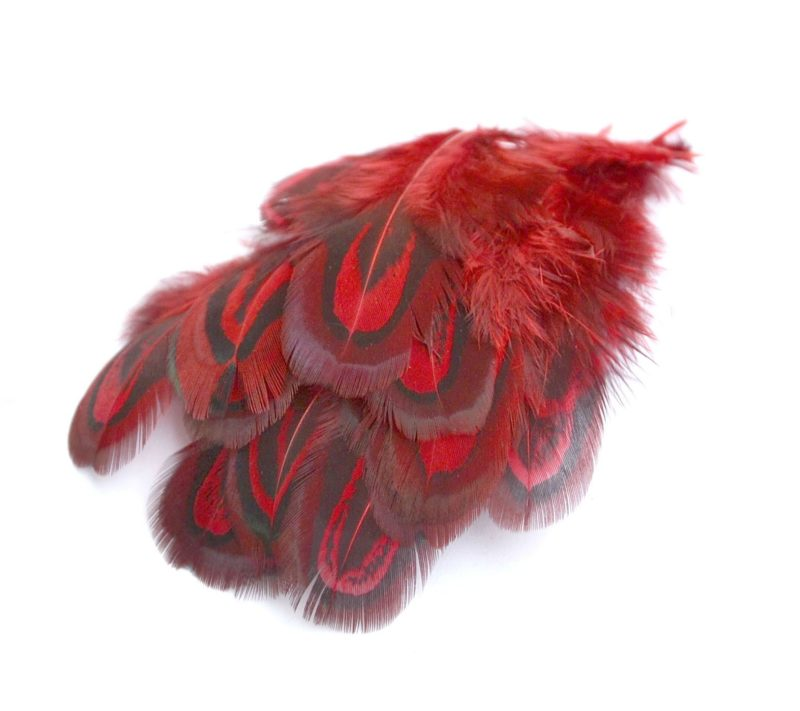 Barevné peří z bažanta červené