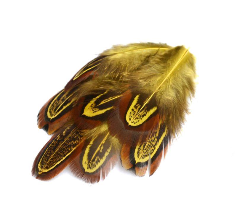 Barevné peří z bažanta žluté