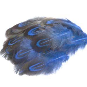 Barevné peří z bažanta modré