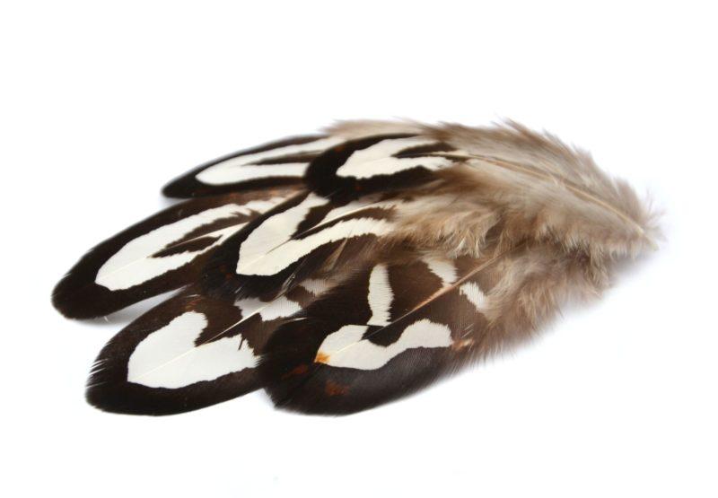 Přírodní bažantí peří černobílé