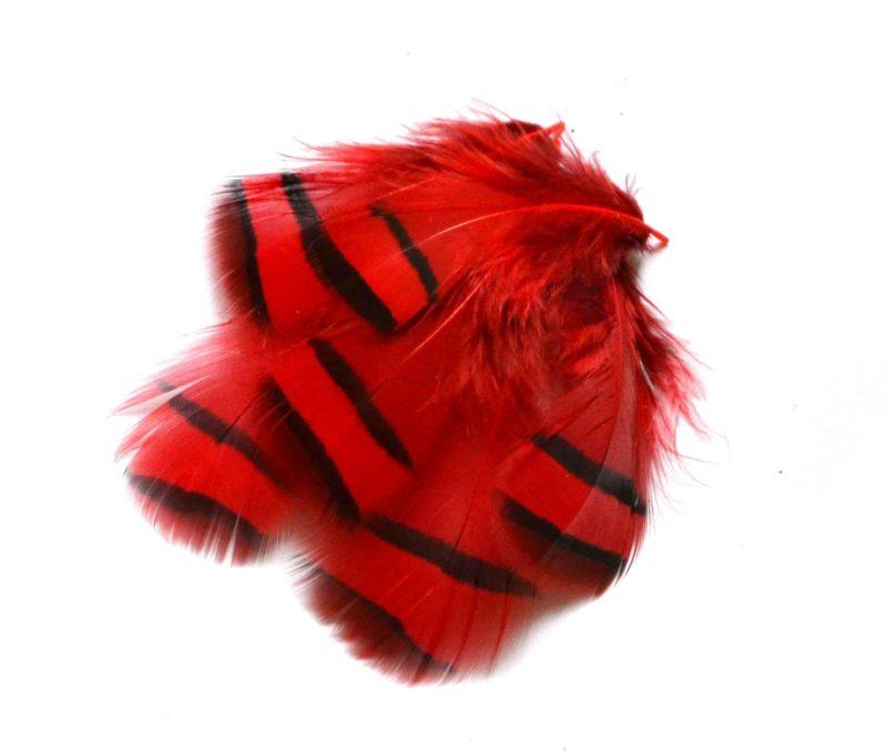 Peříčka z koroptve červená
