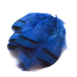 Peříčka z koroptve modrá